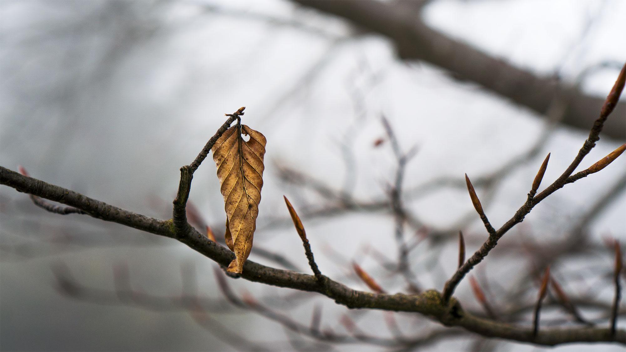 leaf varazze riccardo bernucci photo
